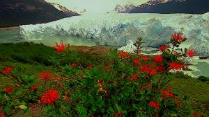 Очарование природы (Трилогия) / Faszination Natur (Trilogie) (1996-2004) BDRip 1080p